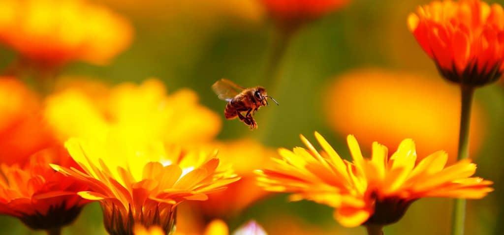 گرده افشانی زنبور عسل در کافه کتاب
