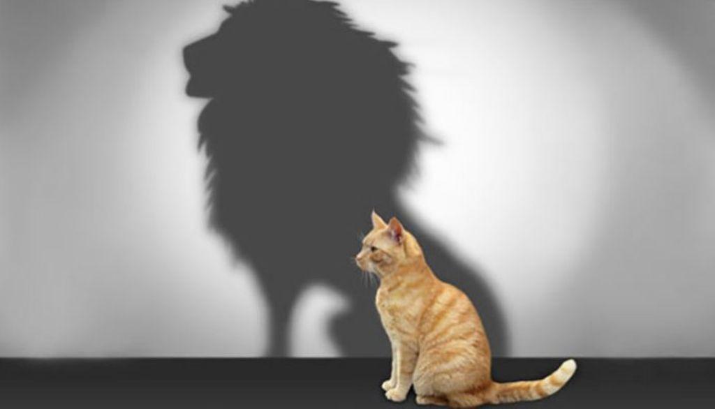 خودشیفتگی گربه